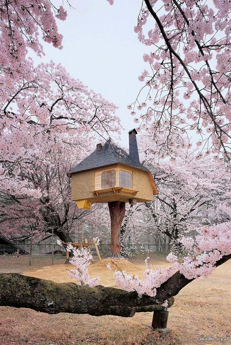 1-tree-house