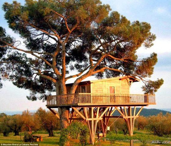 23-tree-house